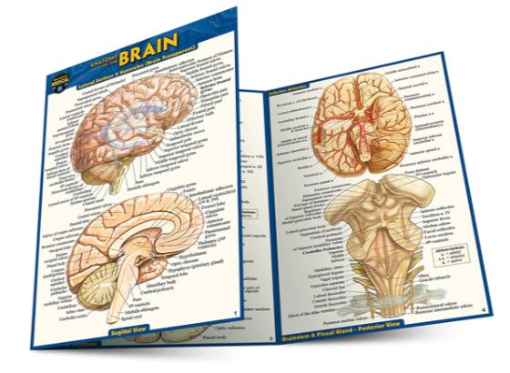 Anatomy of the Brain Pocket Guide (4