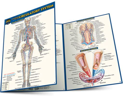 Anatomy of the Circulatory System Pocket Guide (4