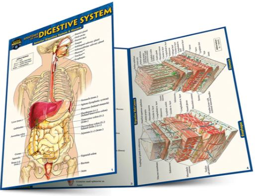 Anatomy of the Digestive System Pocket Guide (4