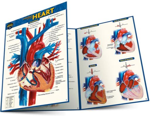 Anatomy of the Heart Pocket Guide (4