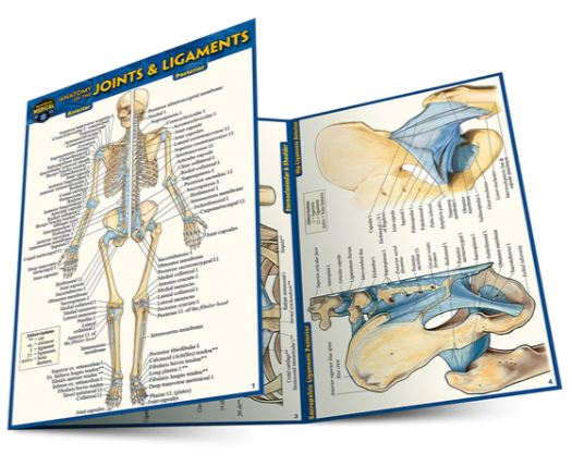 Anatomy of the Joints & Ligaments Pocket Guide (4